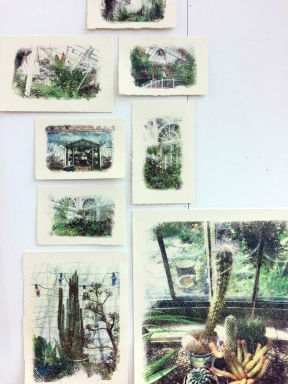 Cellulose Prints